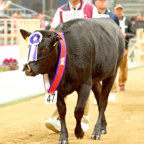 A5ランク仙台牛 和牛 出品牛